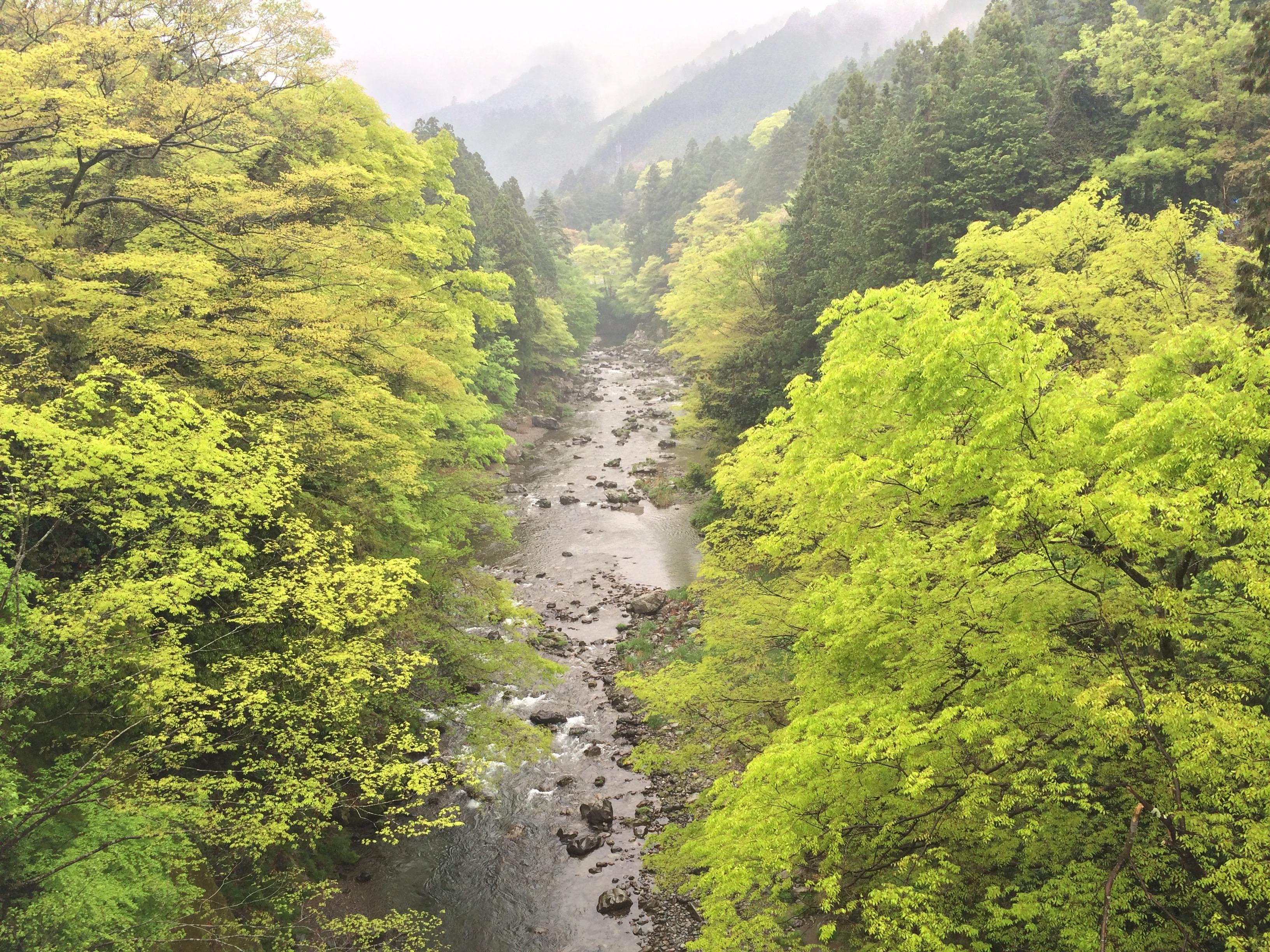 Nobeyama 100 km Ultra Marathon – 22nd May 2016